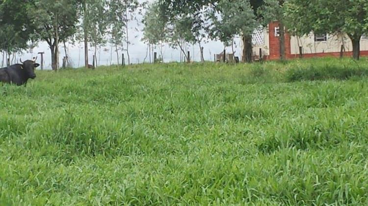 Imagem 166 - Fazenda de Paranhos tem sede invadid...